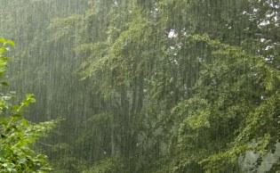 rain24-hours